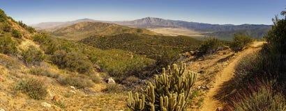 Ökenpanorama med en trevlig sikt in i den dalslingan och kaktuns royaltyfria foton
