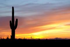 Ökensolnedgång med kaktuns Royaltyfri Bild