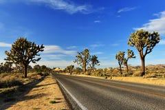 Ökenväg med Joshua Trees i Joshua Tree National Park Royaltyfri Fotografi