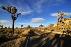 Ökenväg med Joshua Trees i Joshua Tree National Park Arkivfoto