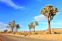 Ökenväg med Joshua Trees i Joshua Tree National Park Royaltyfri Bild