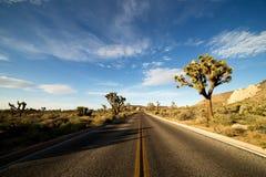 Ökenväg med Joshua Trees i Joshua Tree National Park, USA Arkivfoton