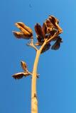 Ökenväxt & Eagle arkivfoton