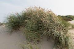 Ökenväxt som växer i sanden Arkivfoton