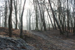 Ökenvintern Park City Zelenogradsk Arkivbild