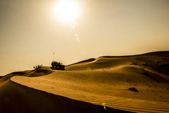 Öknar Dubai royaltyfria foton