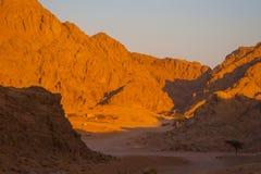 Öknar och landskap för sanddyn på solnedgången royaltyfria foton