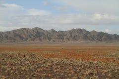 Öknen Gobi arkivfoto