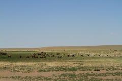 Öknen Gobi royaltyfria bilder