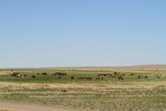 Öknen Gobi arkivbild