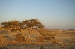 Öknen landskap fotografering för bildbyråer