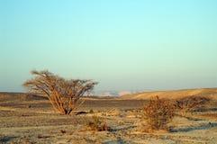 Öknen landskap royaltyfri fotografi