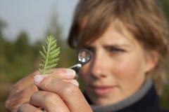 Ökologe stellte eine Anlage fest Stockfotografie