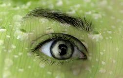 Ökologie des grünen Auges Stockfoto