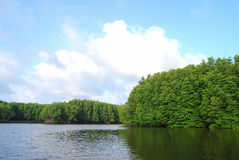 Ökologie des Mangrovenwaldes bei Thailand Lizenzfreies Stockbild
