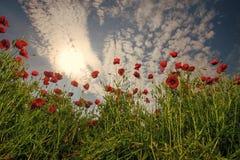 Ökologie und invironment Erinnerungstag, Anzac Day, Ruhe stockfoto