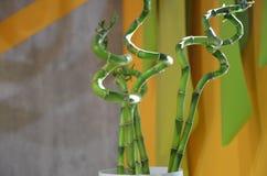 Ökologiehintergrund mit drei Bambusstämmen im Vase auf dem weißen Hintergrund, der auf dem Holztisch steht lizenzfreies stockbild