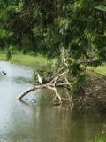 Ökologiehintergrund - wässern Sie Inneres, Tropfen und mit Paaren Fischen Lizenzfreies Stockfoto