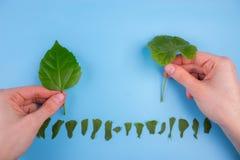 Ökologisch freundliches und nachhaltiges Umweltkonzept Betriebsbäume stockbild