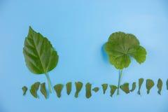 Ökologisch freundliches und nachhaltiges Umweltkonzept Betriebsbäume lizenzfreie stockfotografie