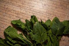 Ökologisch reiner Spinat stockfotografie