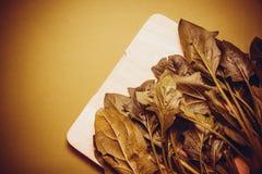 Ökologisch reiner Spinat lizenzfreie stockfotografie
