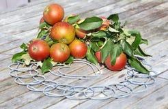 Ökologische Äpfel Stockfotografie