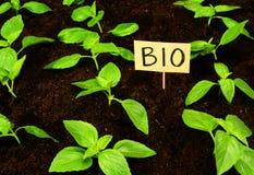 Ökologische Biosprösslinge der Jugend im Boden, nachhaltiges Leben Lizenzfreies Stockfoto