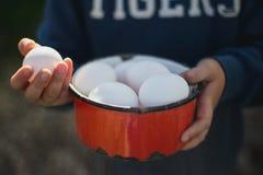 Ökologische Eier in der Hand stockbild
