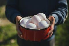 Ökologische Eier in der Hand stockbilder