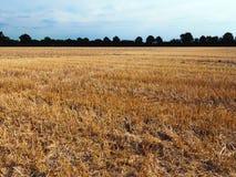Ökologische Landwirtschaft Stockbild