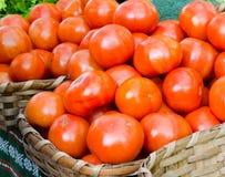 Ökologische Tomaten Lizenzfreies Stockbild