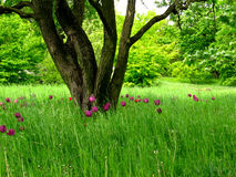 Ökologische Wiese stockbild