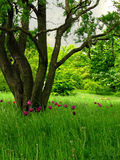 Ökologische Wiese Lizenzfreies Stockbild