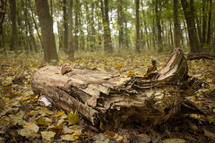Ökologischer Kontrast der Baumbelastung Lizenzfreies Stockfoto