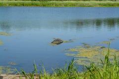 ökologisches Krisenfoto Abfall im Wasser Stockbilder