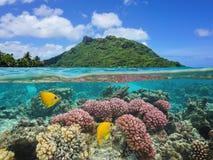 Ökorall och fisk undervattens- franska Polynesien Arkivbild