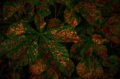 Ökosystem im Herbst Lizenzfreies Stockbild