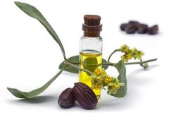 Öl, Blätter, Blume und Samen Buxacee Simmondsia chinensis Lizenzfreies Stockbild