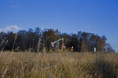 Öl, das in den Herbstwald schaukelt stockfoto