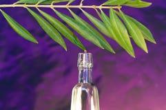 Öl des Olivenbaums stockbilder