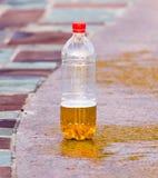 Öl i en plast- flaska Arkivfoto