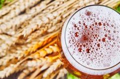 Öl i exponeringsglas Royaltyfri Bild