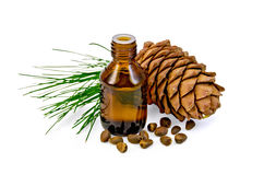 Öl mit Zedernkegel und -nüssen Stockfoto