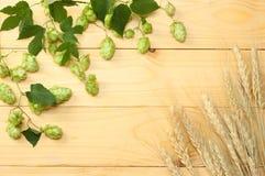 Öl som bryggar ingredienser, hoppar, och vete gå i ax på den ljusa trätabellen Ölbryggeribegrepp bakgrundsöl innehåller lutningin Fotografering för Bildbyråer