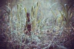 Ölflaska på jordningen i gräset Arkivbild