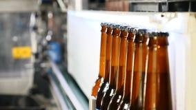 Ölflaskaproduktion Fyllda bruna flaskor i en linje i fabrik Flaskor som på flyttar transportbandet på glasflaskan lager videofilmer
