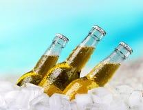 Ölflaskor i is på blå ljus bakgrund royaltyfria foton