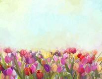Ölgemälde-Tulpenblumen in den Wiesen Stockbild