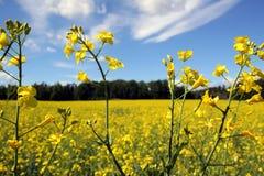 Ölhaltiger Samen stockfotos